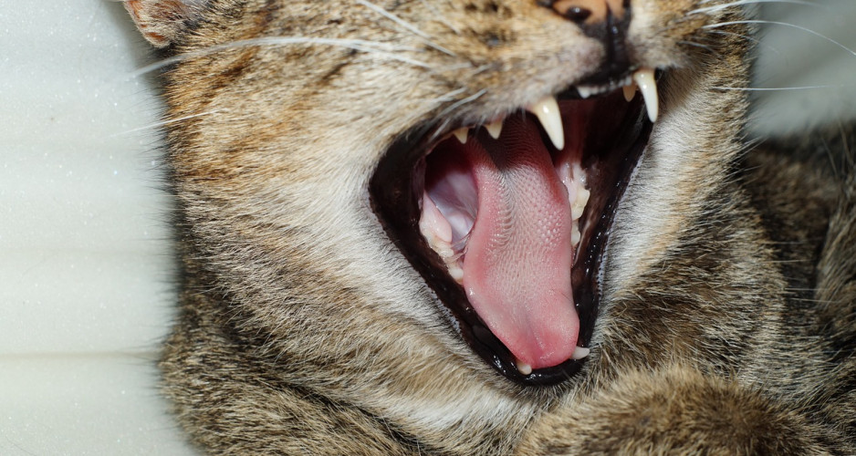 Love When Cats Lick You? Cats' Sandpaper-Like Tongues Revealed