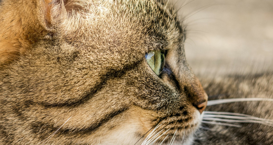5 ways whiskers gives your cat super powers